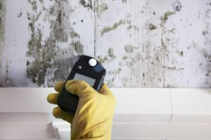 Mold Assessment and Air Sampling